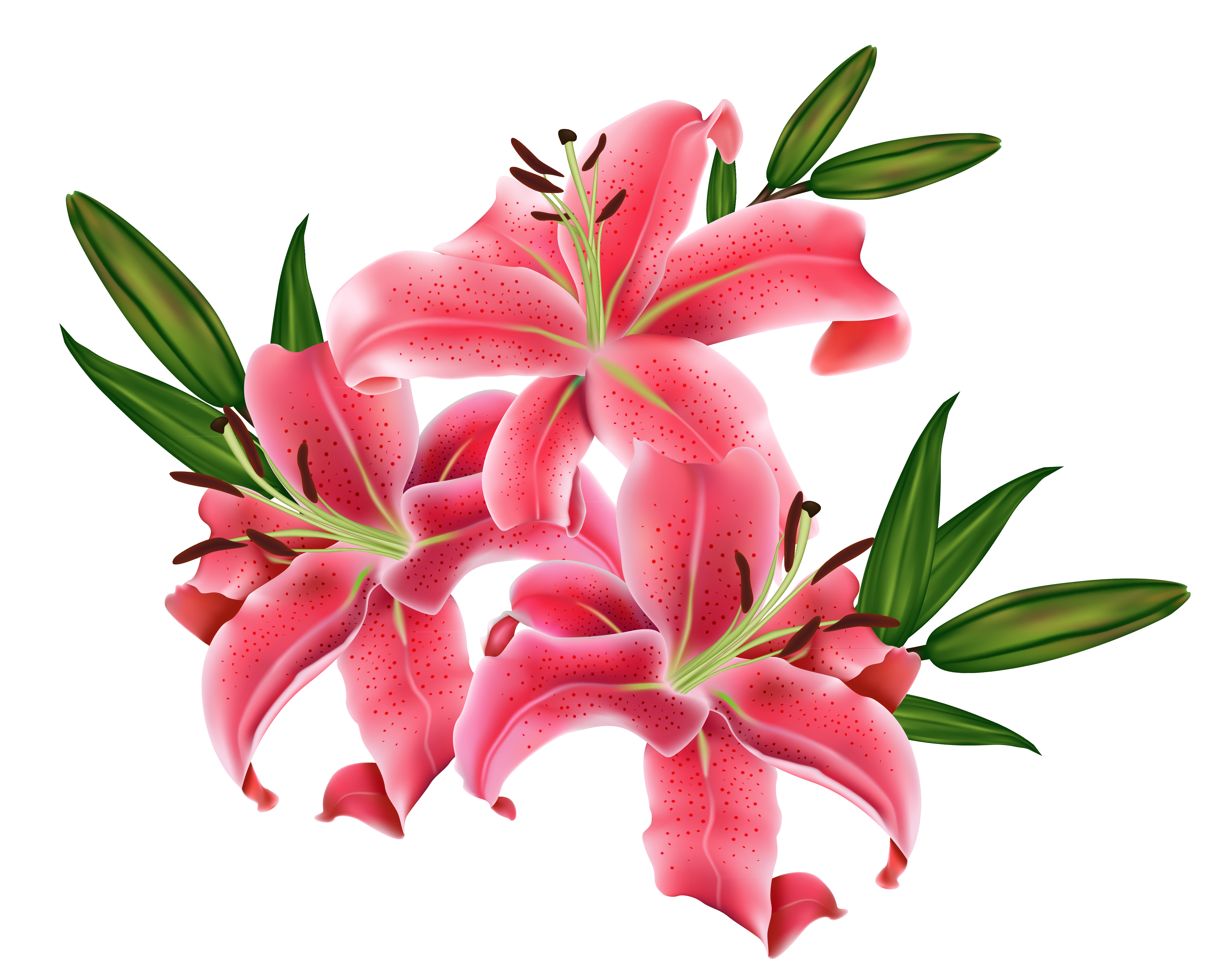 Free star lily clipart clip freeuse clipart lilies clip freeuse