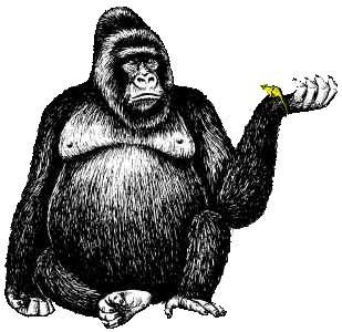 Cross river gorilla clipart graphic free download Cute gorilla clipart no background - ClipartFox graphic free download