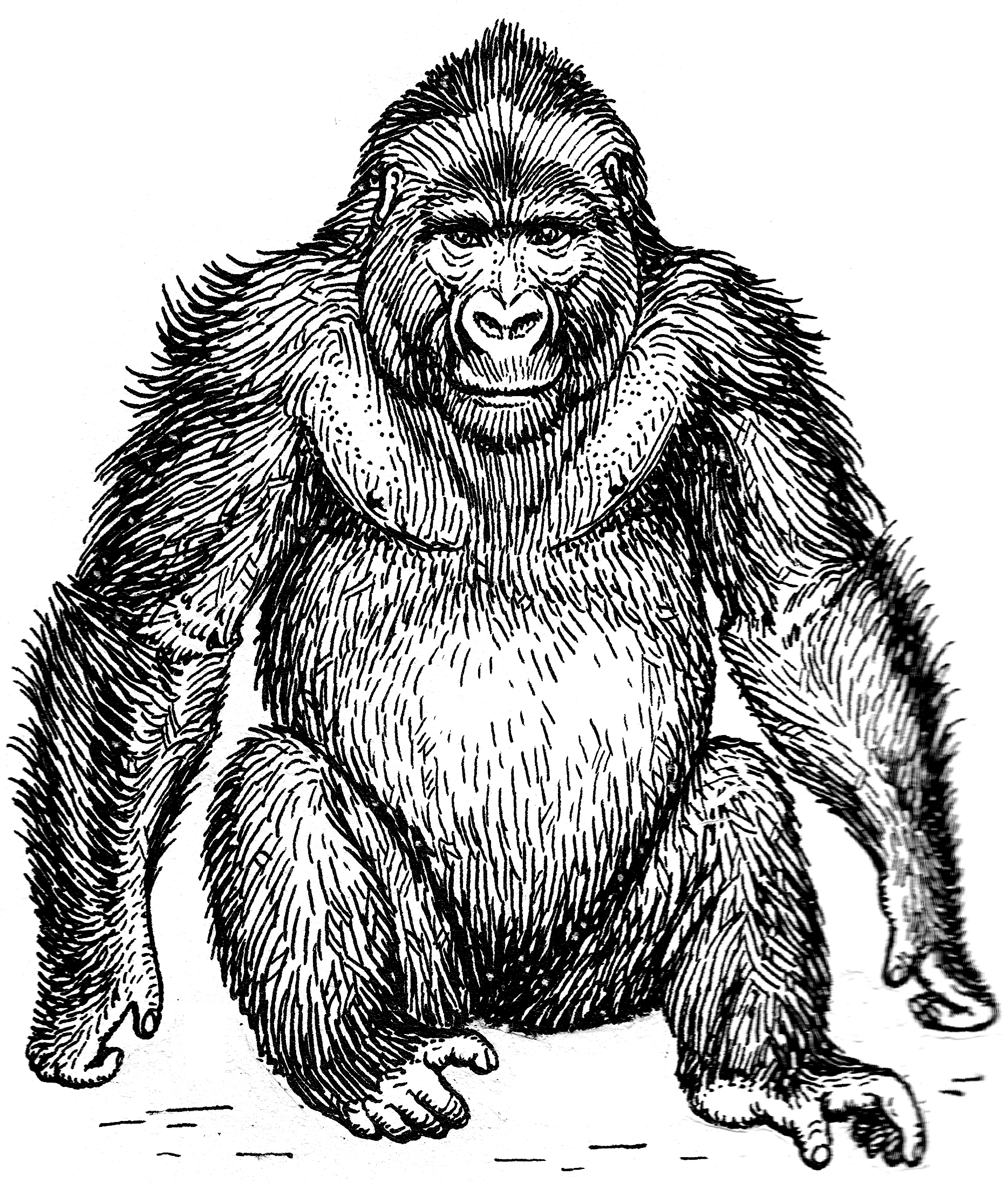 Presentation name on emaze. Cross river gorilla clipart