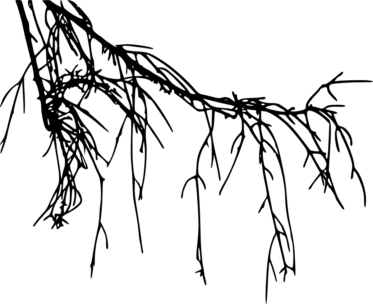 Cross roots clipart image transparent stock Tree Root Silhouette at GetDrawings.com | Free for personal use Tree ... image transparent stock