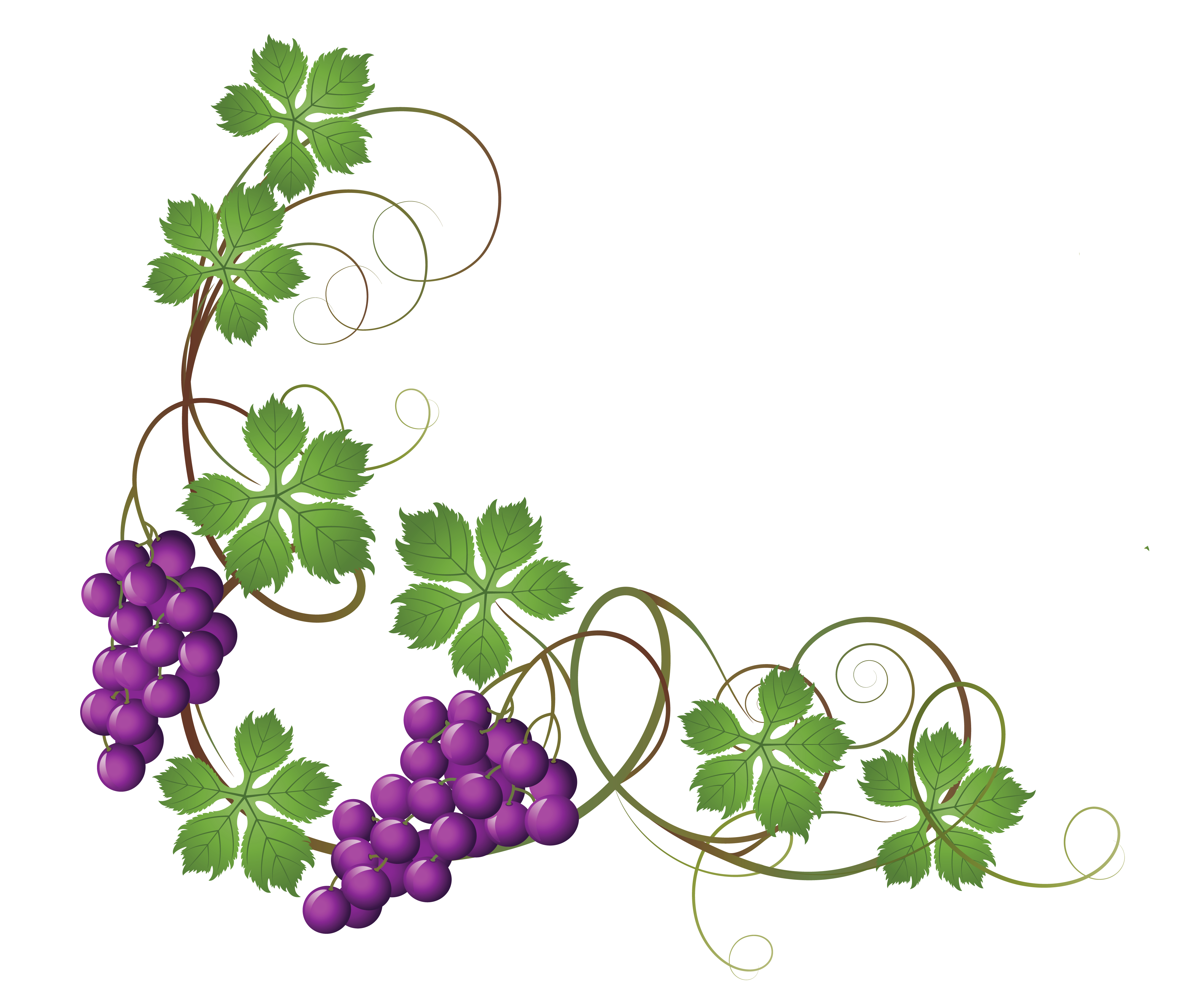 Cross vine flowers clipart svg black and white 28+ Collection of Vine Clipart Transparent | High quality, free ... svg black and white