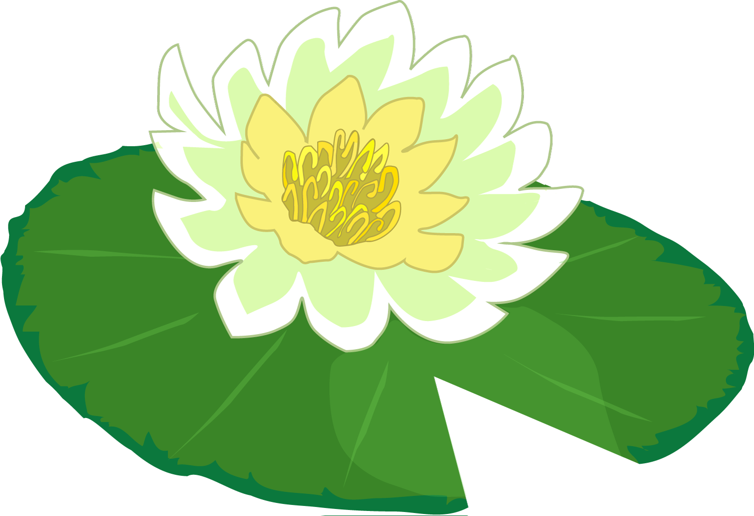 Water lily flower clipart banner transparent download White flower water lily clipart the cliparts png - Clipartix banner transparent download