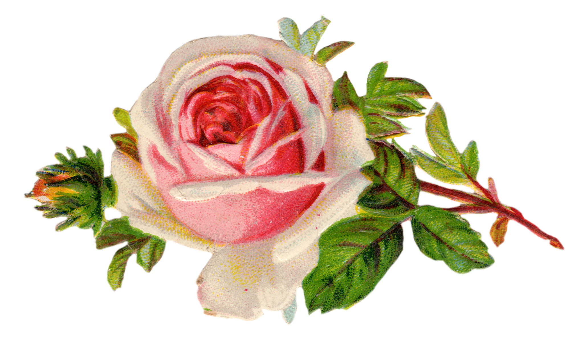 Crown of roses clipart. Free vintage rose clip