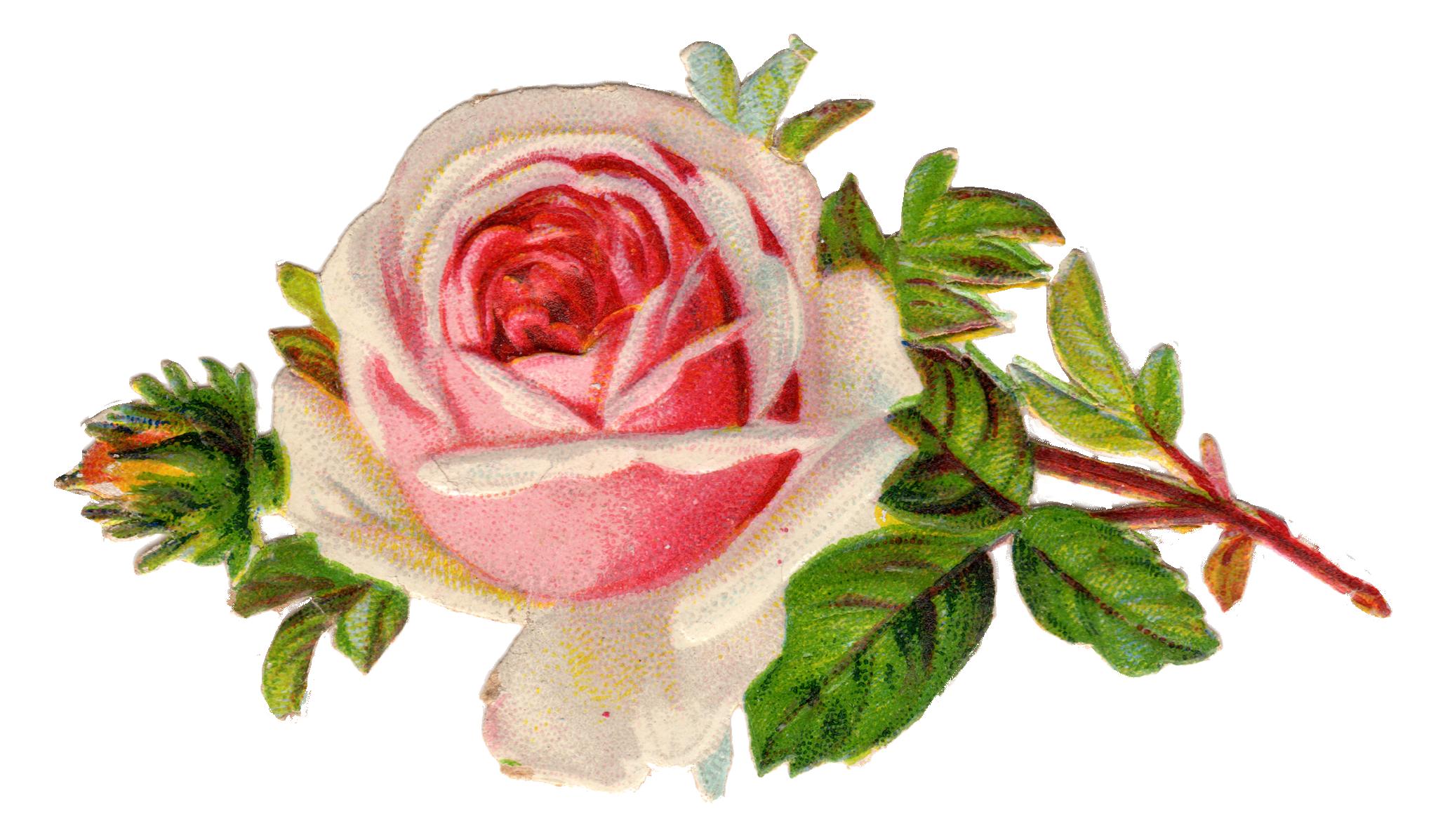 Rose pink baby cross clipart free Free Vintage Rose Clip Art | Pinterest | Clip art, Ephemera and Vintage free