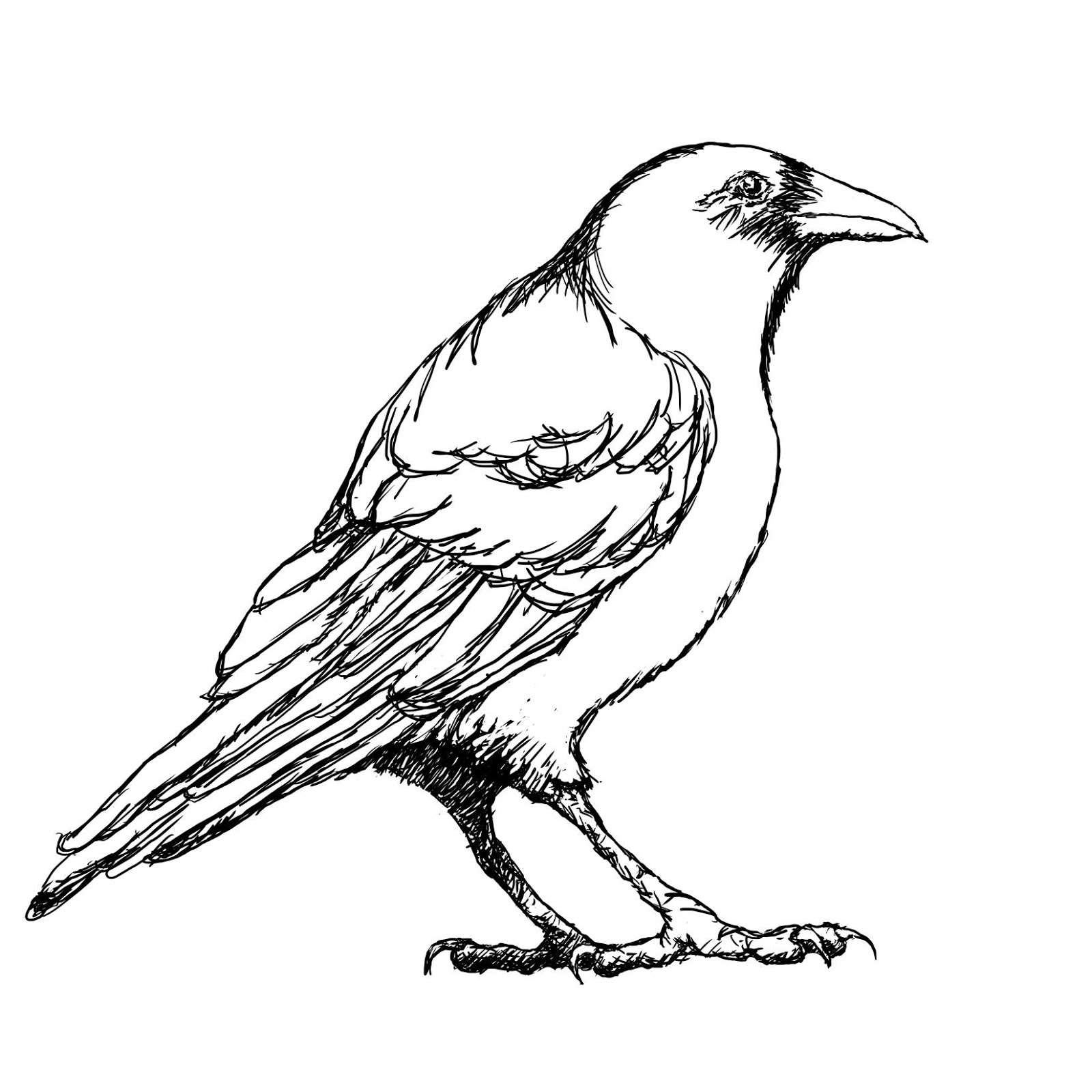 Crow outline clipart vector black and white download Crow outline clip art - ClipartPost vector black and white download