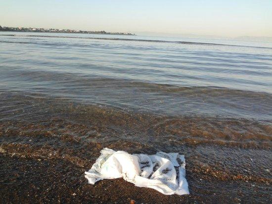 Crown memorial royalty free swimming diaper - Picture of Crown Memorial State Beach, Alameda ... royalty free