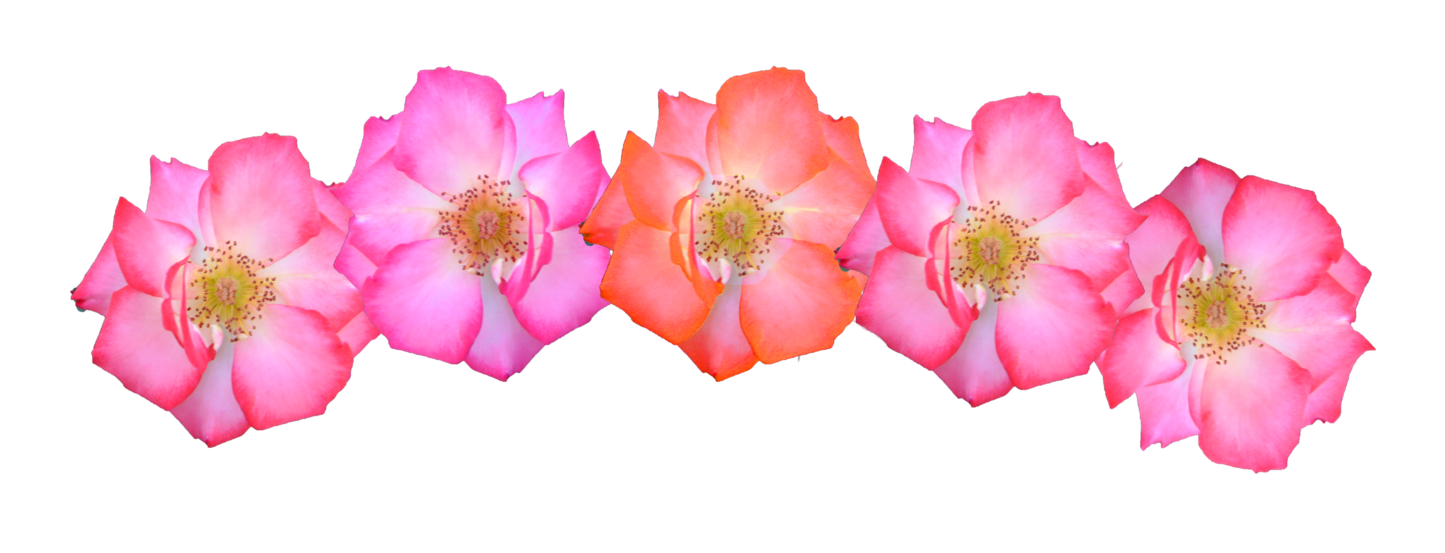 Rose crown clipart clipart freeuse stock Flower Crown Transparent PNG Pictures - Free Icons and PNG Backgrounds clipart freeuse stock