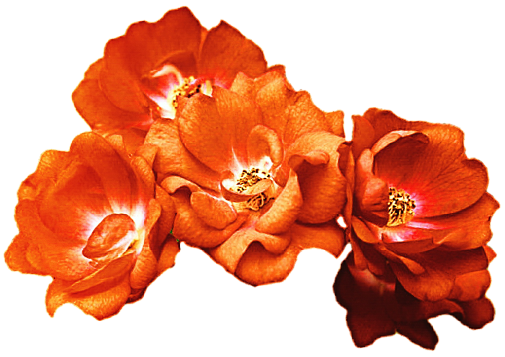 Crown of roses clipart clip free stock Orange Rose Crown by jeanicebartzen27 on DeviantArt clip free stock