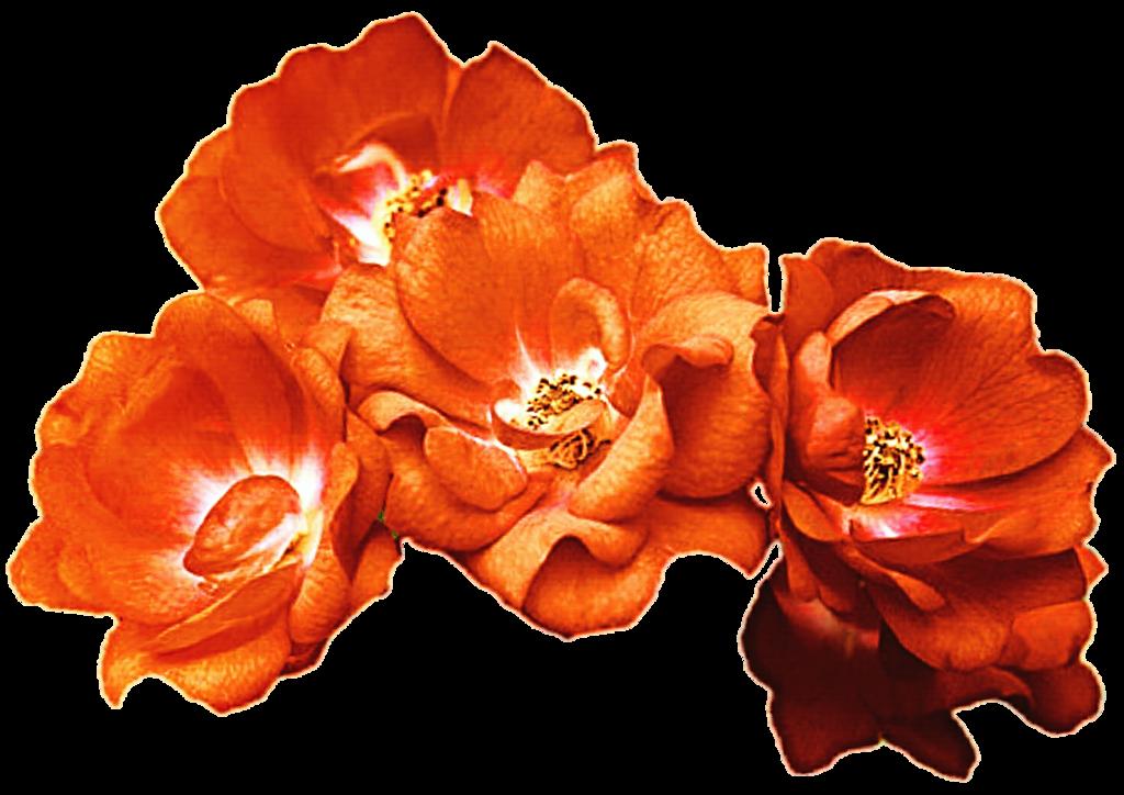Png clipart flower crown royalty free Orange Rose Crown by jeanicebartzen27 on DeviantArt royalty free