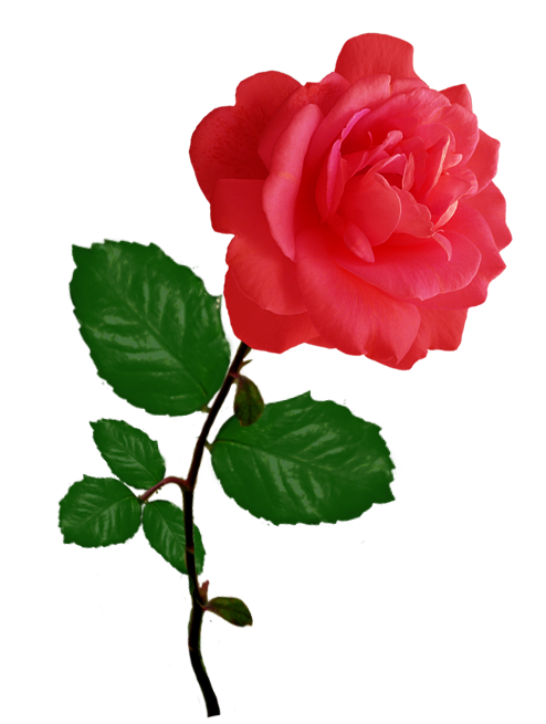 Crown of roses clipart. Rose red