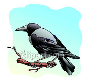 Crowonbranch clipart image black and white stock A Crow Or Raven on a Branch - Royalty Free Clipart Picture image black and white stock