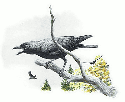 Crowonbranch clipart clip freeuse Crow - /animals/birds/U.S._Common/Crow.png.html clip freeuse