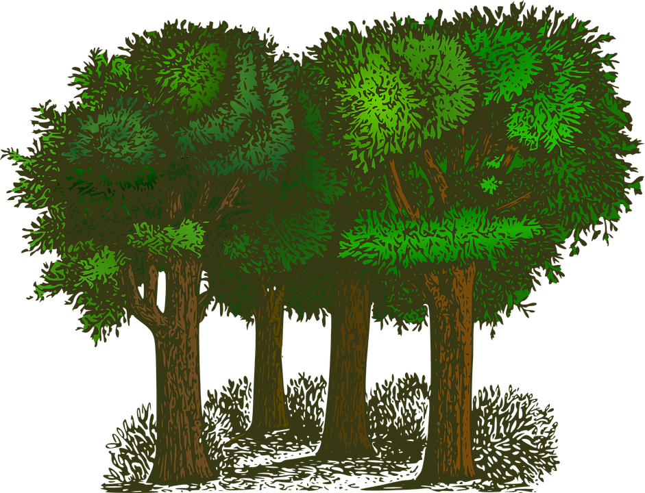 Cut down tree clipart transparent download Professional Tree Services Are Here to Make You Safe - New Word transparent download