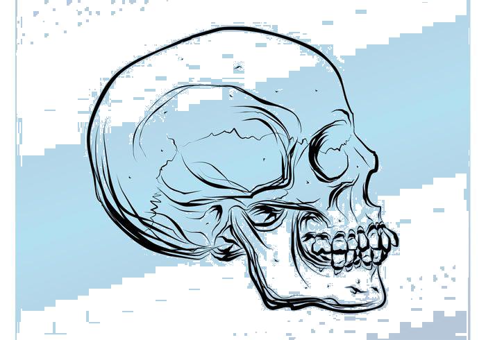 Cute baseball skull clipart svg transparent stock Skull Cartoon Drawing at GetDrawings.com | Free for personal use ... svg transparent stock