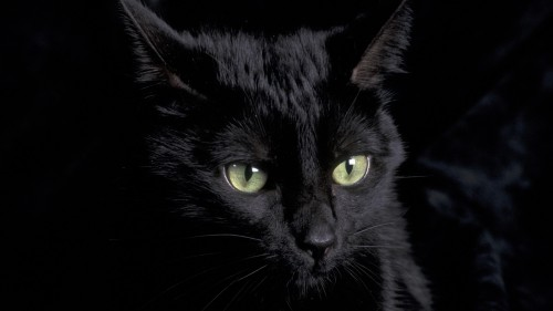 Cute black cat with green eyes clipart transparent Cat Wallpaper 50 - I Love Cats! Cute Cat & Kitten Pictures transparent