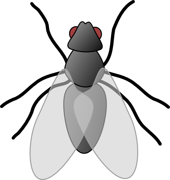 House fly clipart black and white svg library download Fly Bug Insect Clip Art at Clker.com - vector clip art online ... svg library download