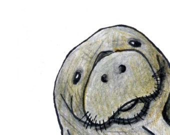 Cute manatee clipart image black and white stock Best Manatee Clip Art #6171 - Clipartion.com image black and white stock