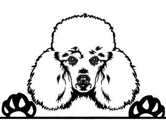 Cute poodle face clipart black and white vector royalty free stock Poodle Line Drawing | Free download best Poodle Line Drawing ... vector royalty free stock