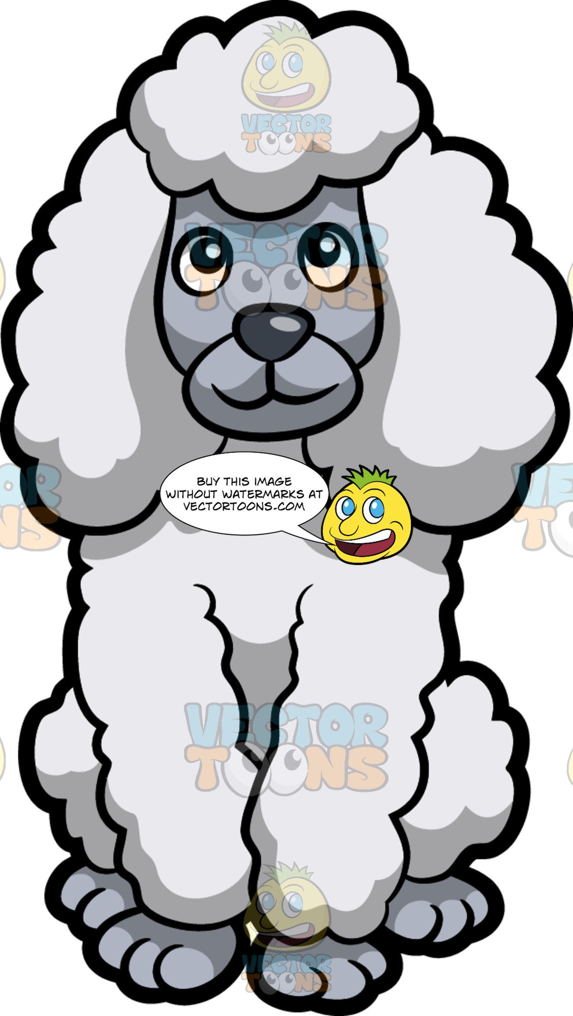 Cute poodle face clipart black and white picture freeuse A Cute White Standard Poodle Sitting Down picture freeuse