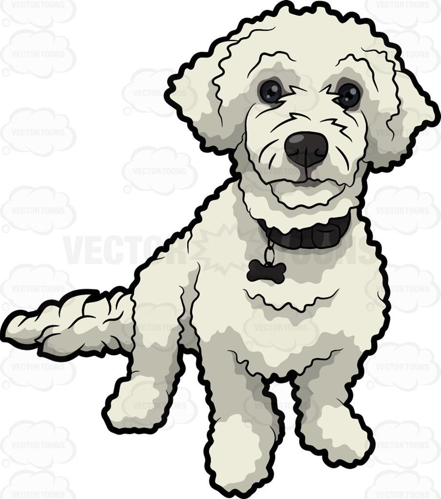 Cute poodle face clipart black and white png free stock A cute white poodle : A dog with curly white fur with black ... png free stock