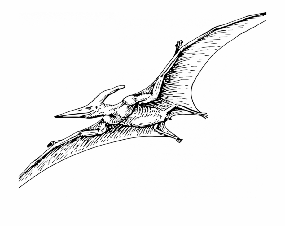 Cute pterodactyl clipart black and white banner Pterodactyls Are Dinosaurs - Flying Dinosaurs Clip Art Black ... banner