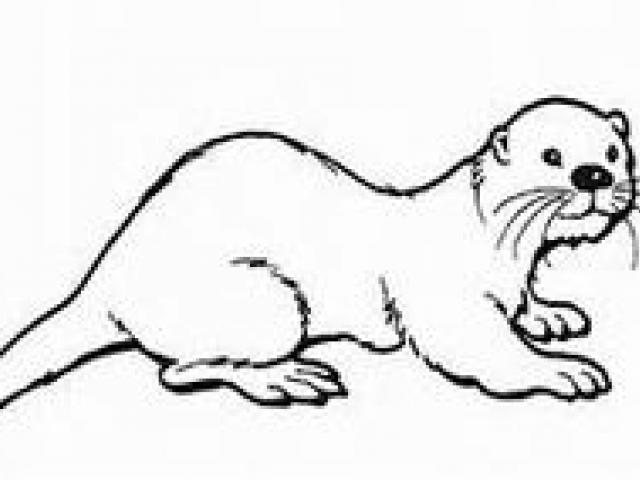 Otter Line Drawing | Free download best Otter Line Drawing ... clip free