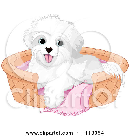 Bichon frise maltese puppy. Cute small bed cartoon clipart