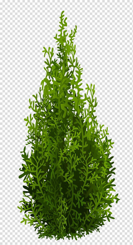 Cypress clipart