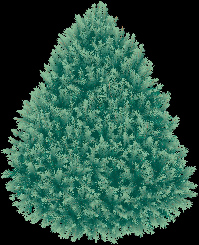 Cypress tree clipart vector transparent stock Fir Tree Png Transparent 2477 vector transparent stock