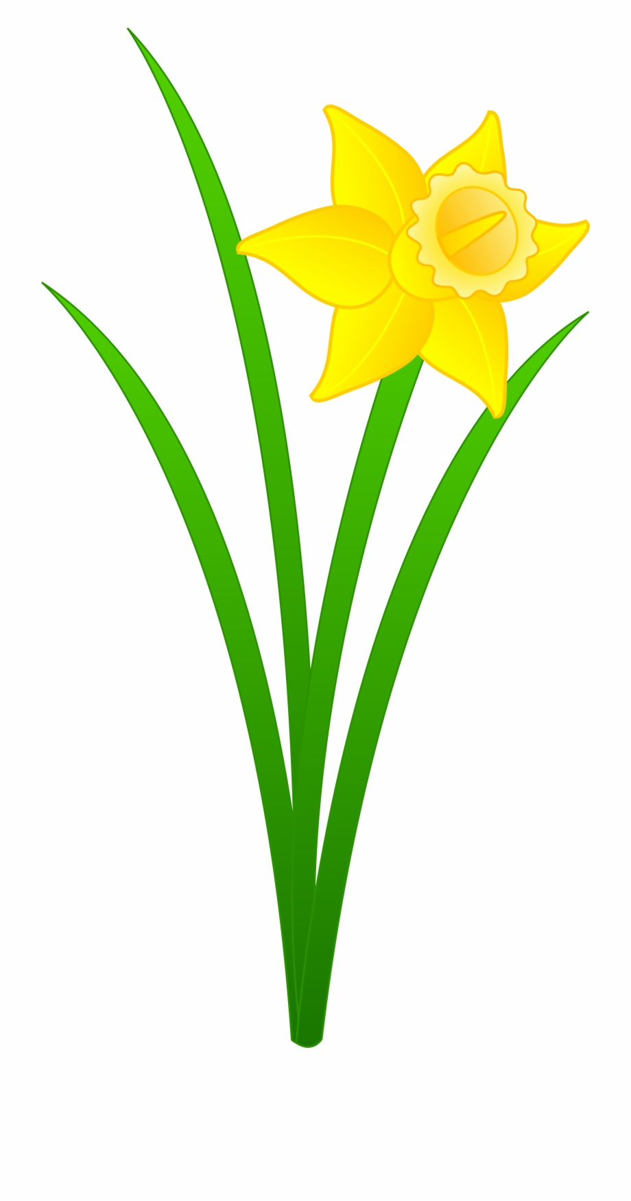 Daffodils clipart clipart library library Daffodil - Daffodil Clipart Free PNG Images & Clipart Download ... clipart library library