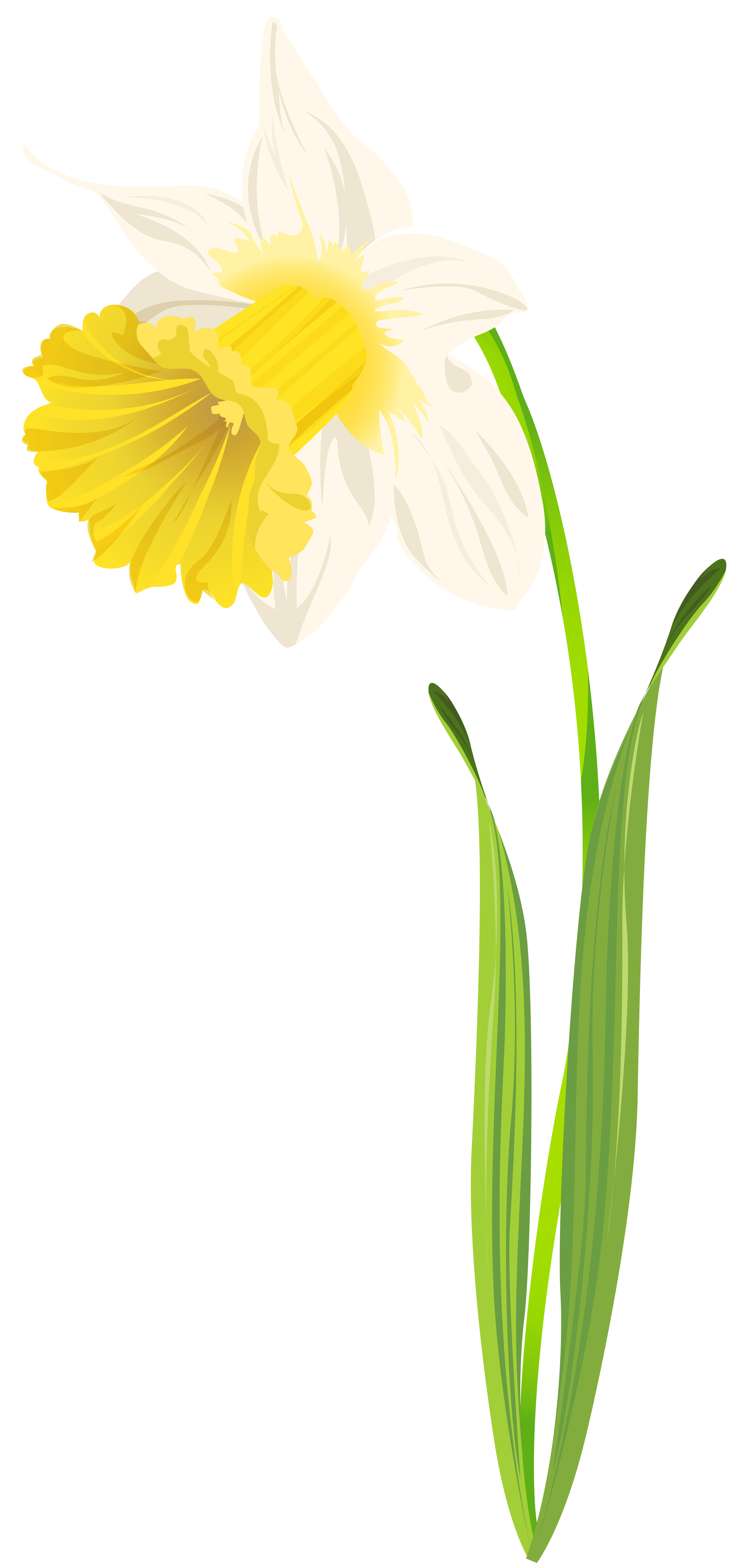 Daffocil clipart clip black and white download Daffodil PNG Clip Art Image - Best WEB Clipart clip black and white download