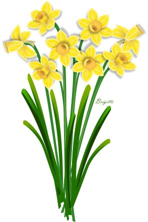 Daffodil clipart picture freeuse library Free Daffodil Cliparts, Download Free Clip Art, Free Clip Art on ... picture freeuse library