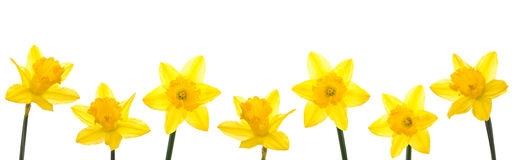 Daffodil border clipart clipart Free Daffodil Border Cliparts, Download Free Clip Art, Free Clip Art ... clipart