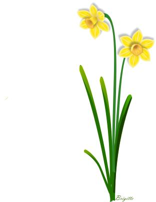 Daffodil border clipart png free stock Free Daffodil Border Cliparts, Download Free Clip Art, Free Clip Art ... png free stock
