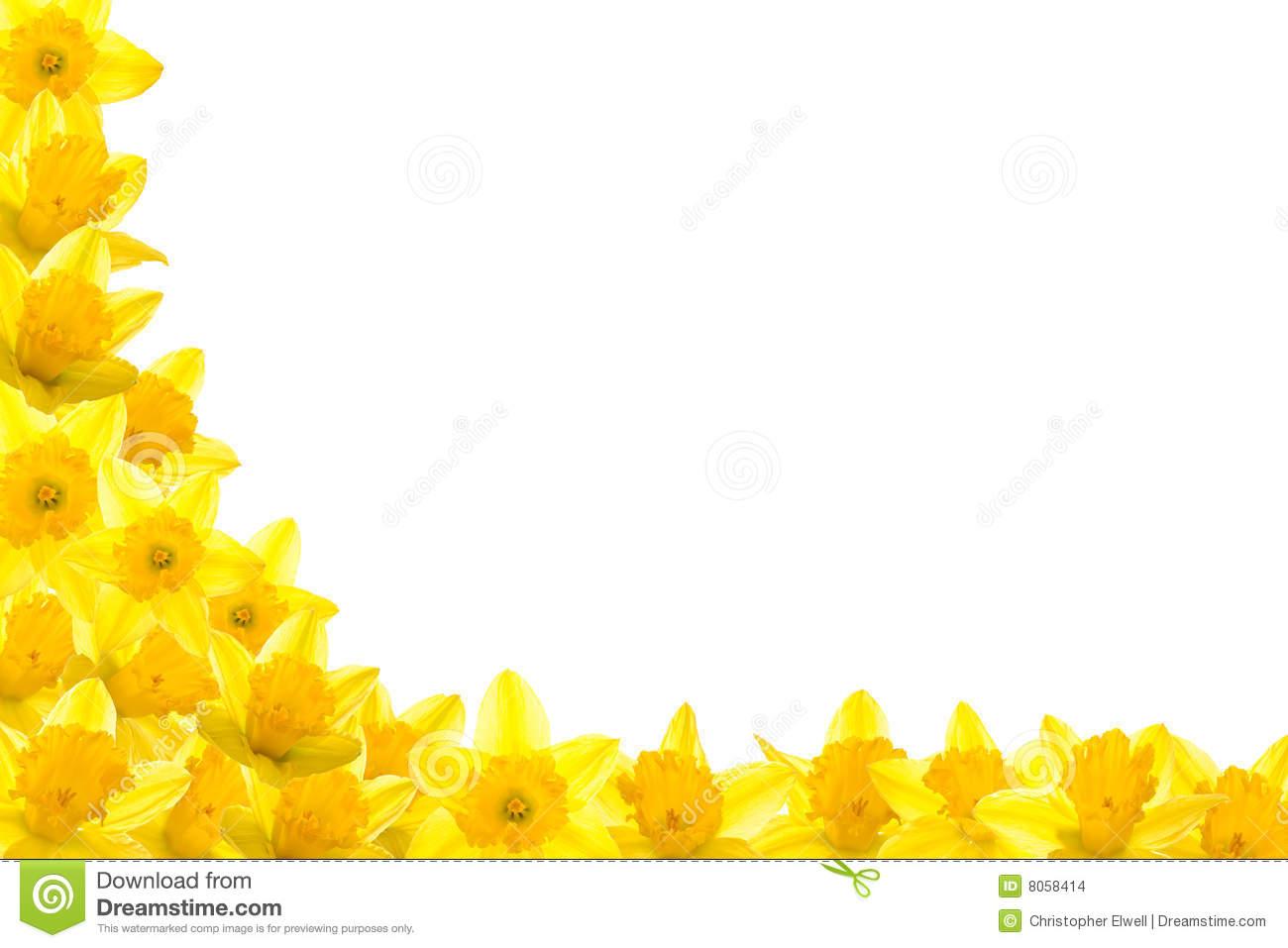 Daffodil border clipart graphic freeuse download Daffodil border clipart 7 » Clipart Station graphic freeuse download