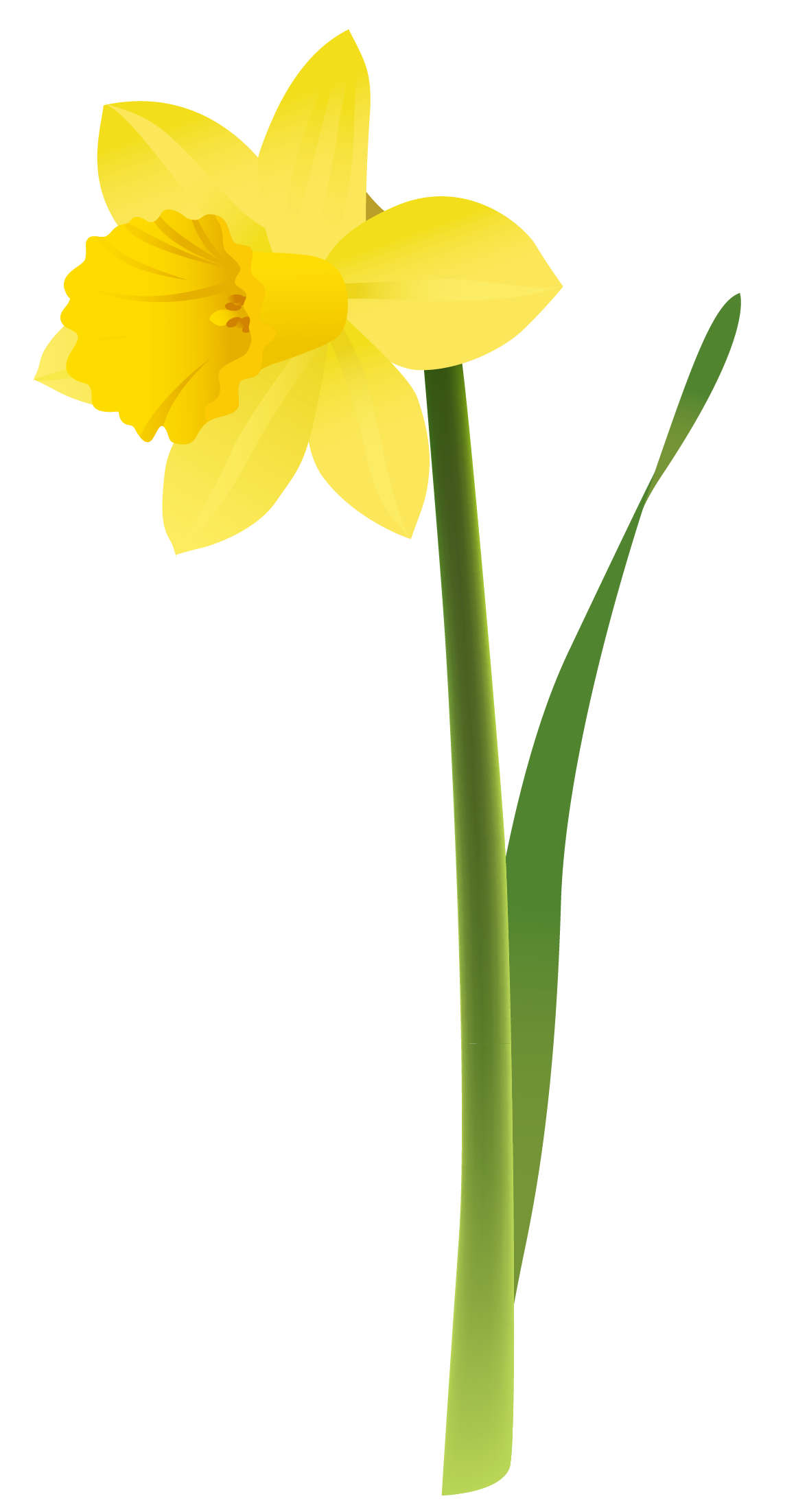Daffodil flower clipart vector royalty free Spring Yellow Daffodil PNG Clipart   Gallery Yopriceville - High ... vector royalty free