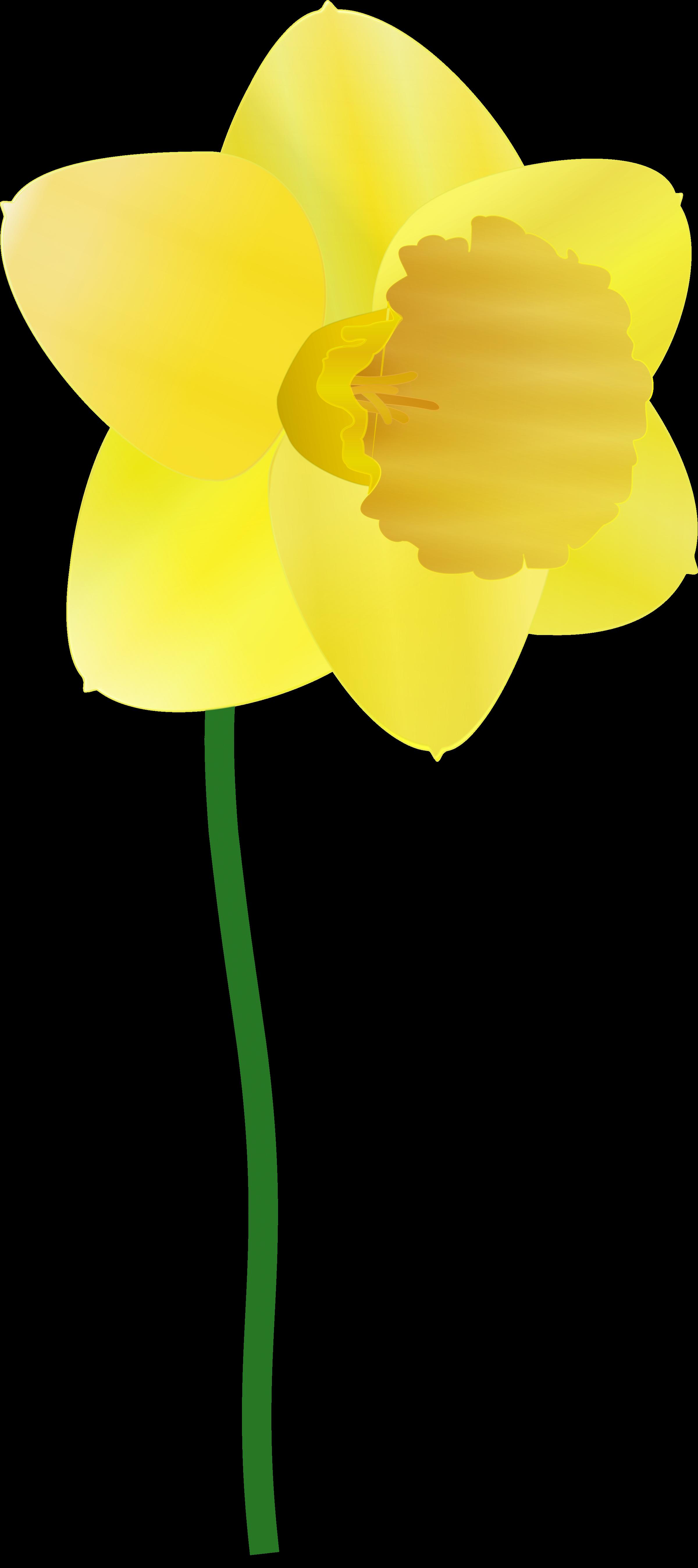 Daffodil flower clipart jpg black and white download Clipart - daffodil jpg black and white download