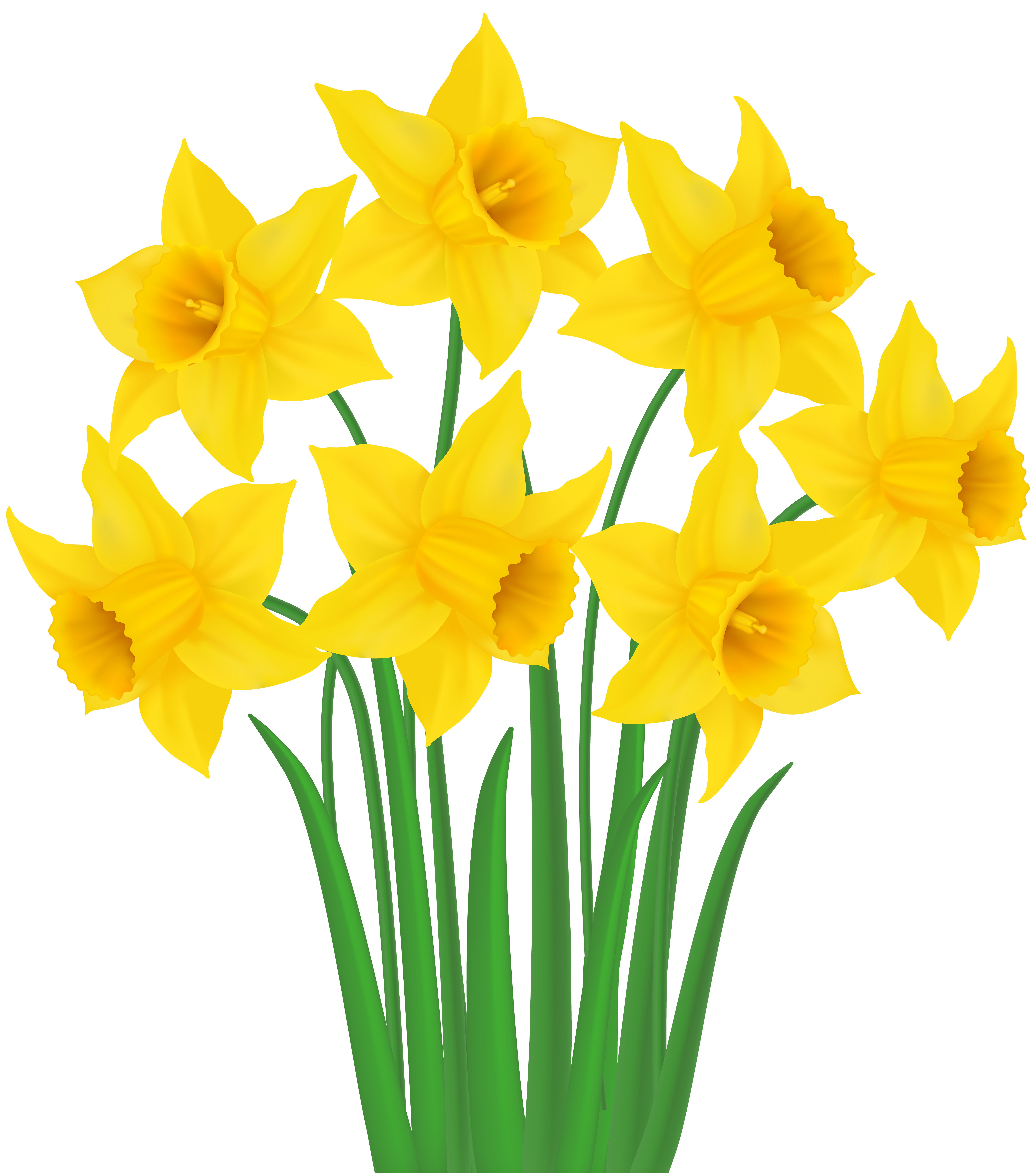 Daffodil flower clipart svg free stock Yellow Daffodils PNG Transparent Clip Art Image   Gallery ... svg free stock