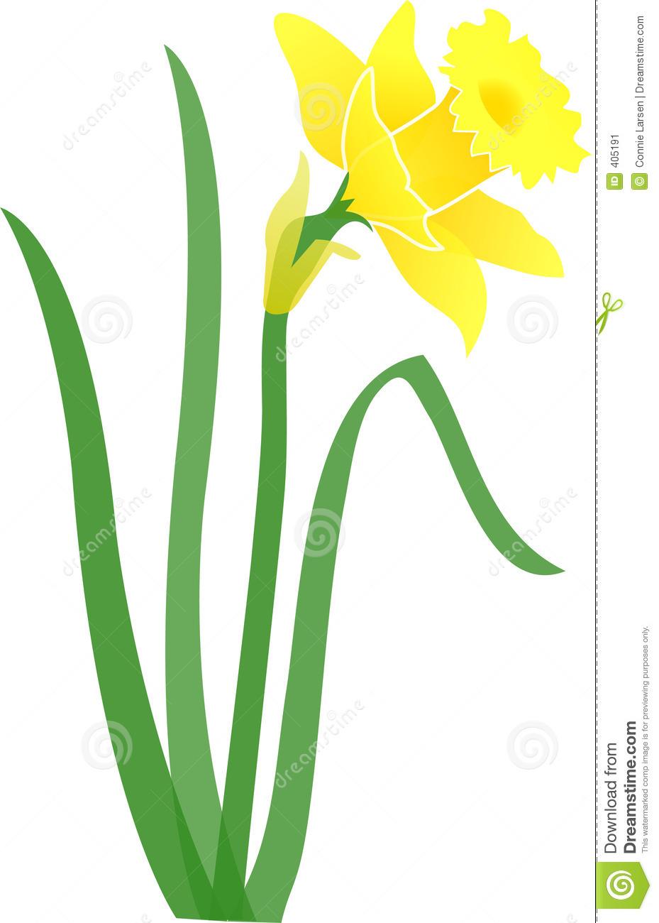 Daffodil graphics clip free download Daffodil-jonquil/eps Stock Image - Image: 405191 clip free download