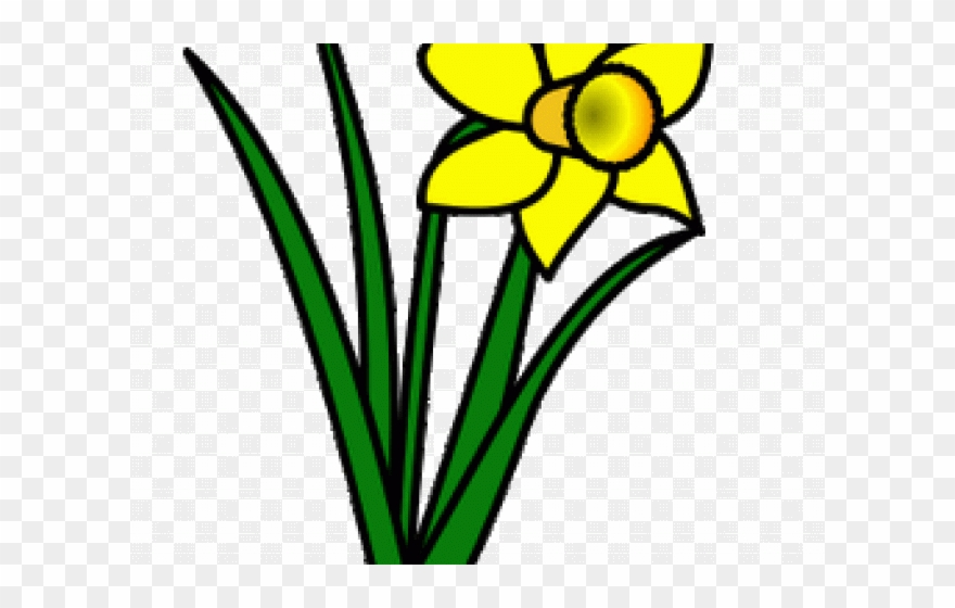 Daffodils clipart svg black and white library Daffodils Clipart Leek - Png Download (#1897646) - PinClipart svg black and white library