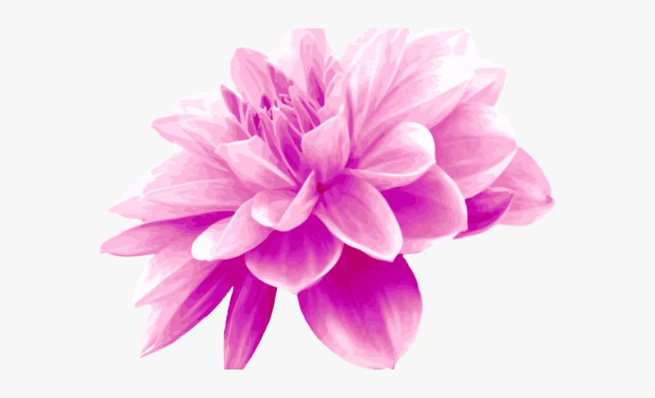 Dahlia clipart free banner freeuse library Dahlia Clipart Light Purple Flower - Pink Colour Flower Png #2246182 ... banner freeuse library