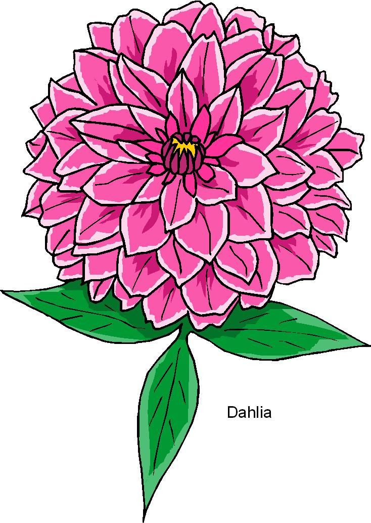 Dahlia clipart free jpg free Dahlia Free Flower Clipart | Free Microsoft Clipart jpg free
