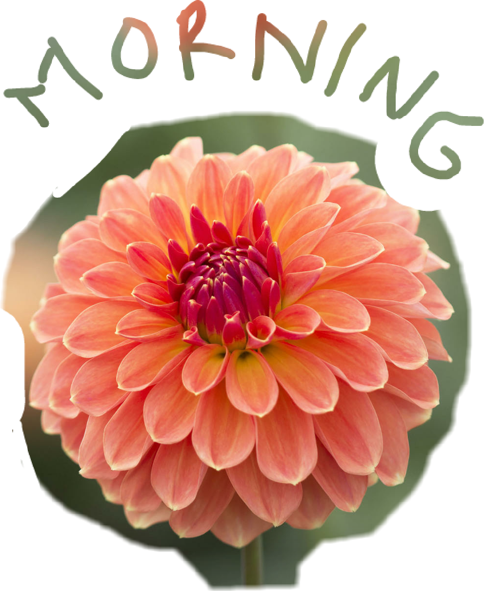 Dahlia flower clipart vector black and white morning good morning dahlia flower flowerphotography... vector black and white