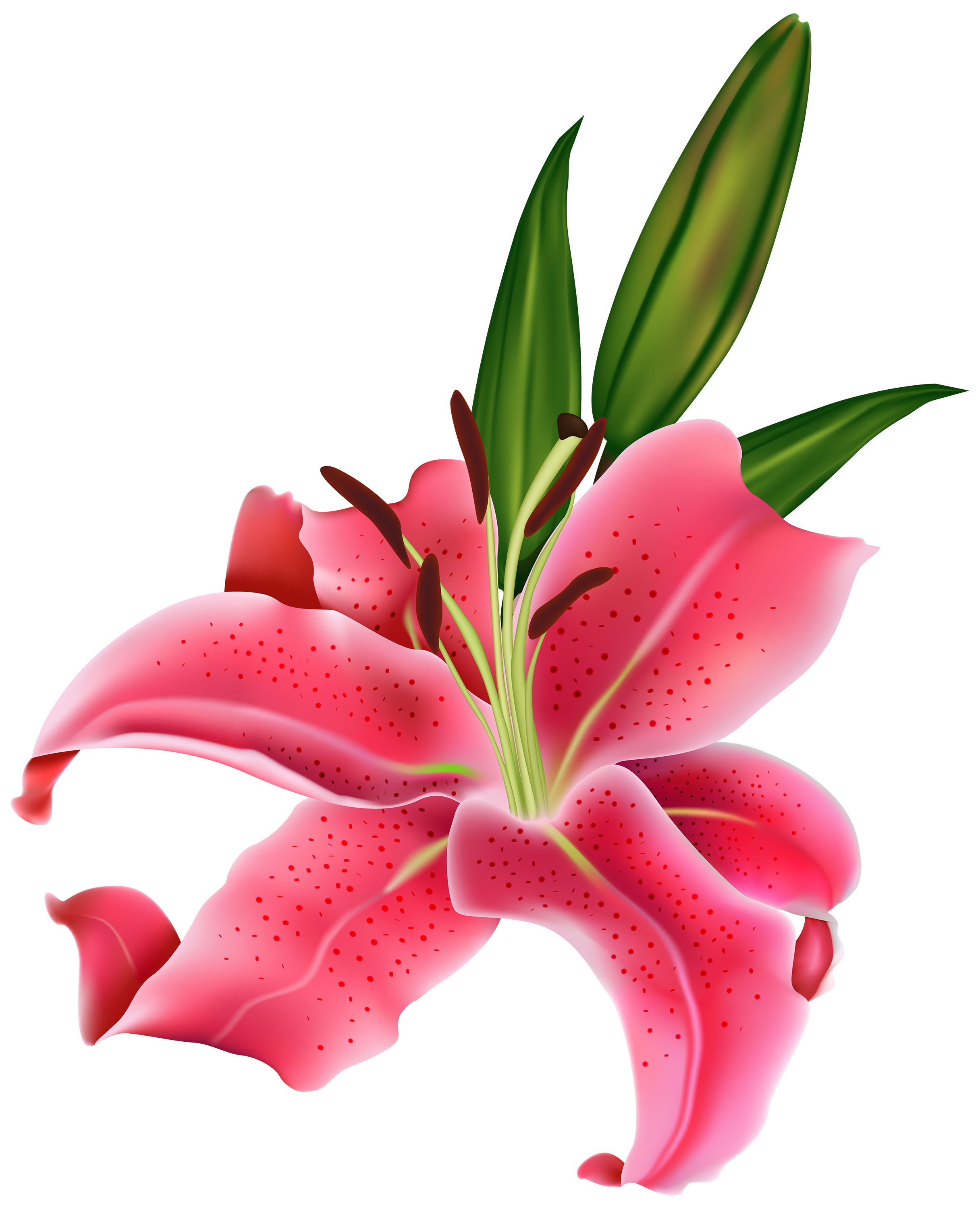 Growing flower clipart svg freeuse stock Pink lilies clipart #2 | Flores | Pinterest | Pink lily, Clipart ... svg freeuse stock