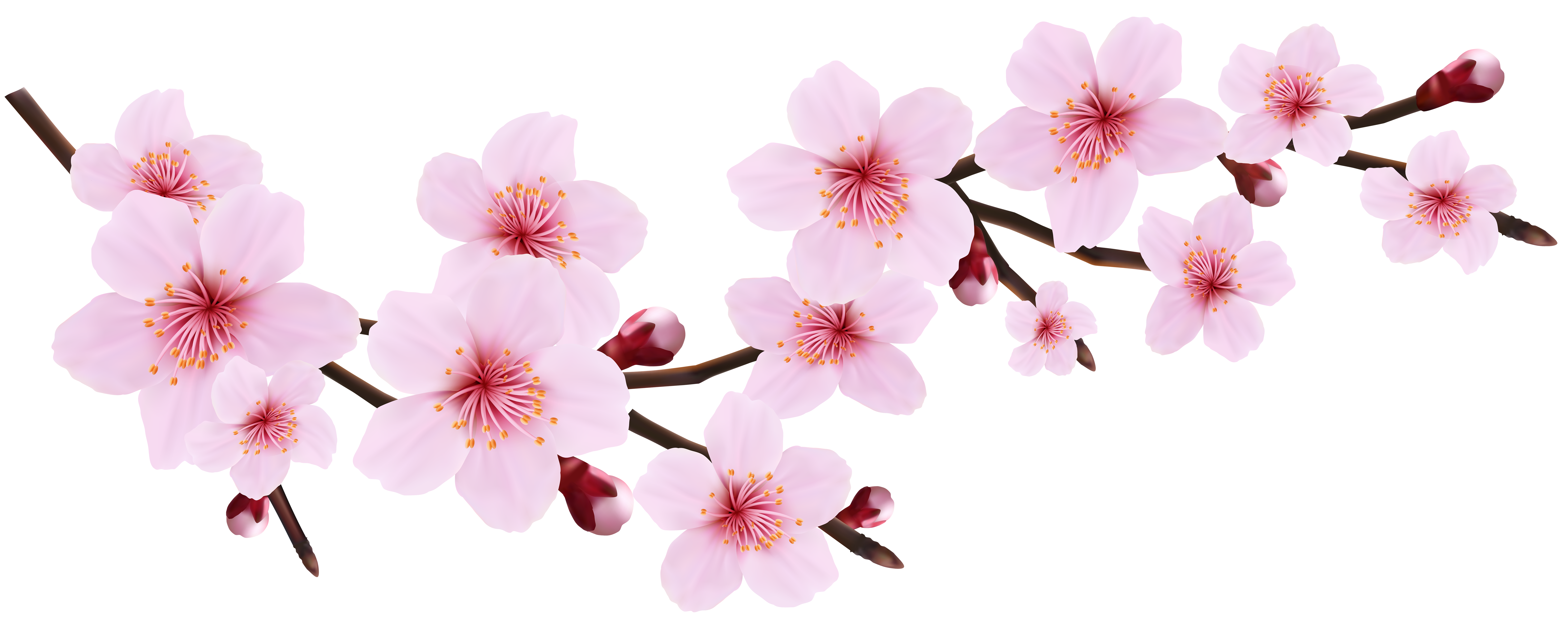 Dainty flower clipart picture free stock Blossom Spring Pink Twig Transparent PNG Clip Art Image | Gallery ... picture free stock
