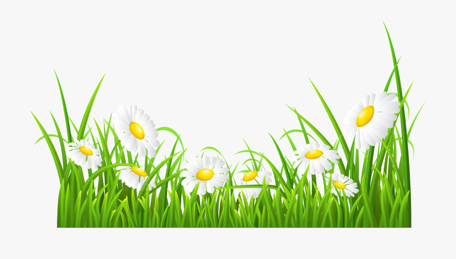 Daisies clipart clip freeuse White Daisies And Grass Transparent Png Clip Art Image ... clip freeuse