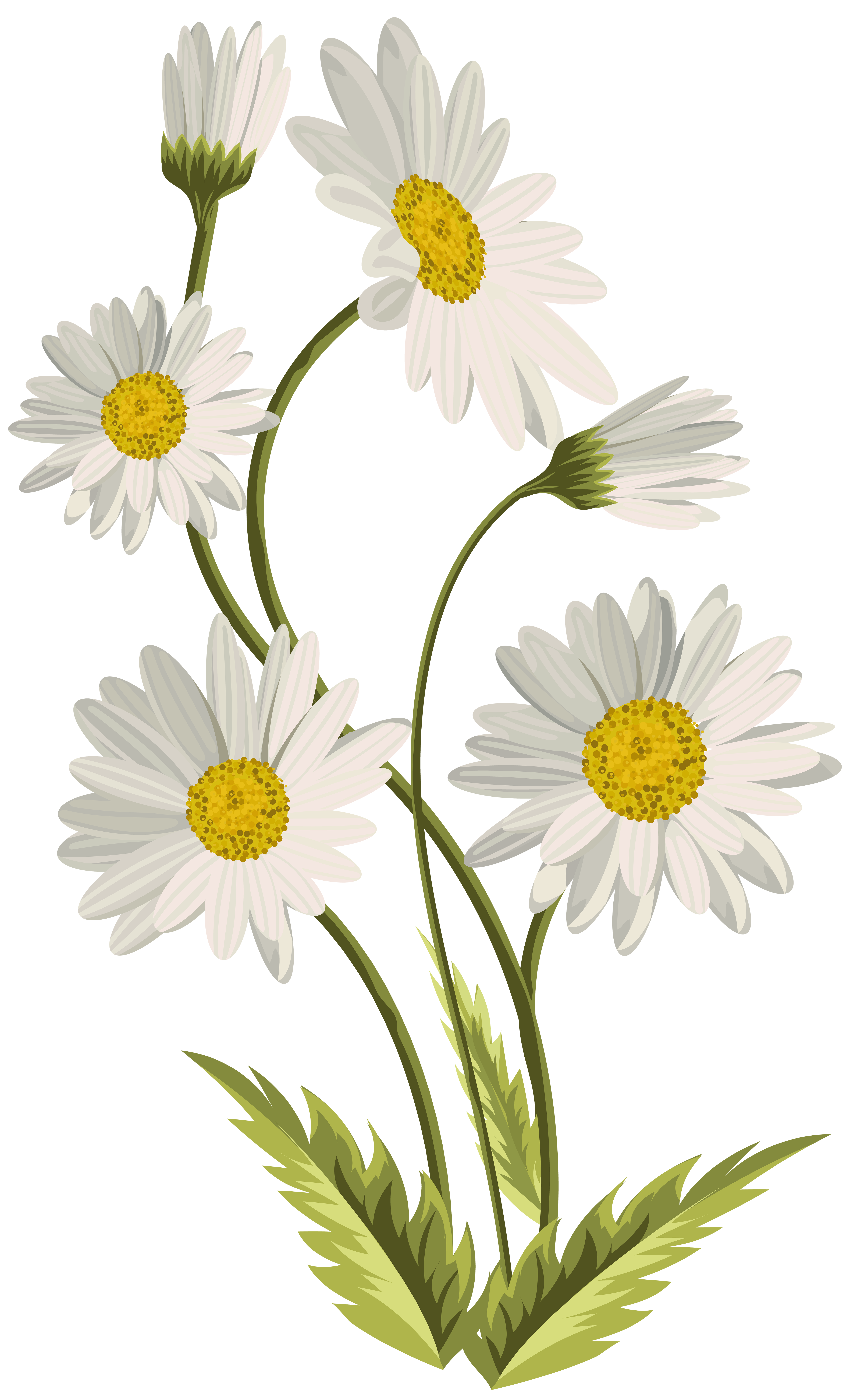 Daisies clipart png royalty free stock Daisies Transparent PNG Clip Art Image | Gallery ... png royalty free stock