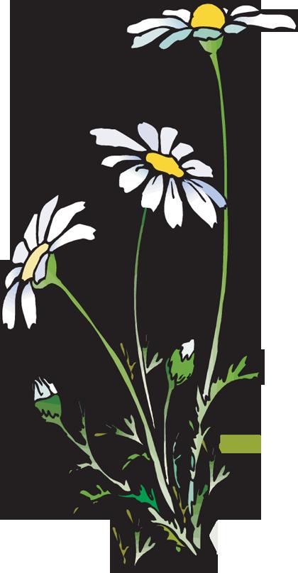 Daisies clipart clip art free stock 16+ Daisies Clipart | ClipartLook clip art free stock