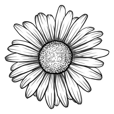 Daisies clipart black and white banner transparent Black And White Daisy Clipart | Free download best Black And White ... banner transparent