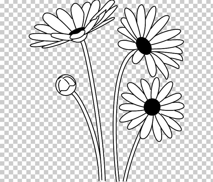 Daisies clipart black and white graphic freeuse library Oxeye Daisy Black And White Argyranthemum Frutescens PNG, Clipart ... graphic freeuse library